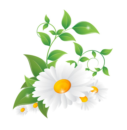 白い背景の上の緑の葉とデイジー