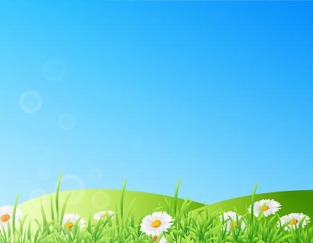 Vector illustration of field of daisies Illustration
