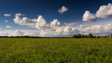 Landscape with clover field and blue sky