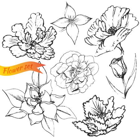 wallflower: Vector illustration of Flowers set: poppy, tulip, lily, magnolia, English wallflower, begonia