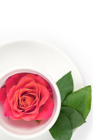 White cup with rose and green leafs on a plate Stock Photo