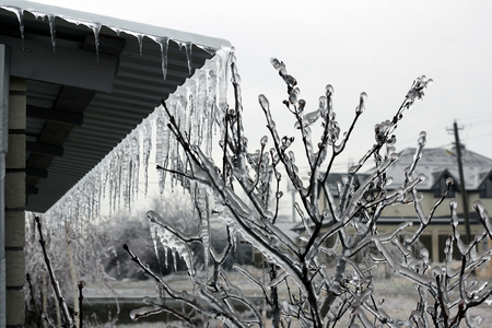 cataclysm: Trees in an ice armor after a rain and a frost Stock Photo