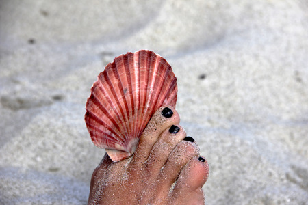 scallop shell: red scallop shell held by toes with white sand in the background