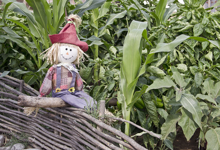 old fashioned vegetables: Fun decorative scarecrow sitting on a rustic fence