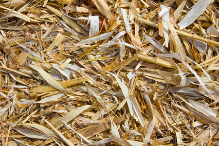 chaff: Straw, dried corn leaves background