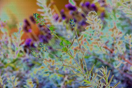 flor morada: lavanda fondo abstracto
