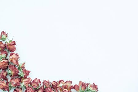 bouquet fleurs: Background with red roses isolated on white with sample text