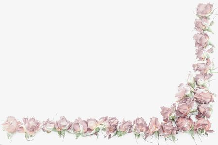 sample text: Background with pink roses isolated on white with sample text Stock Photo