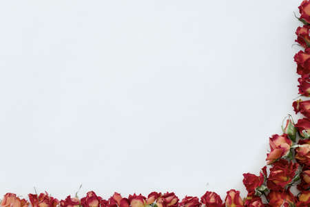 sample: Background with red roses isolated on white with sample text