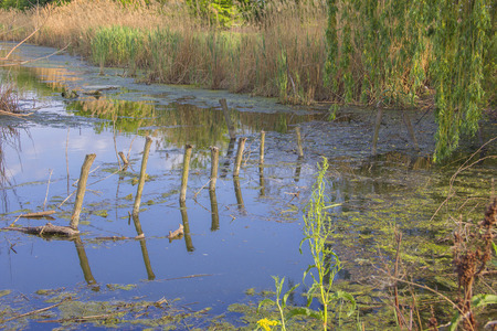 Water pollution in the lake, waterlogging