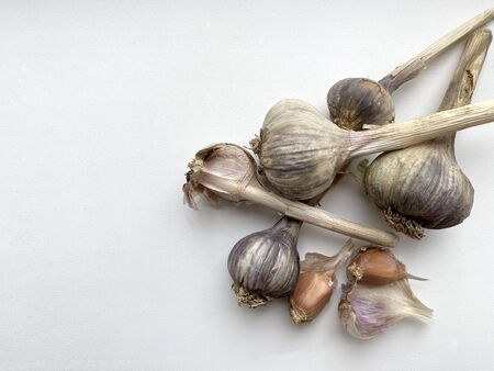 few whole heads of last year s old garlic and two cloves in husk on a white surface