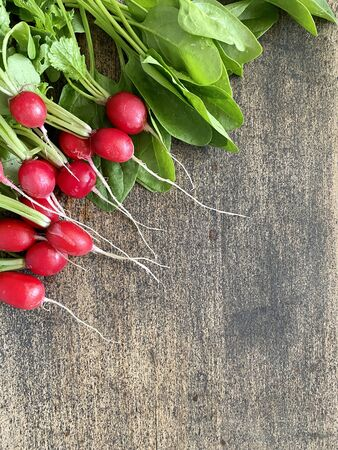 bunch of fresh young radishes with green tops, harvest from the home garden. Dark wooden surface, copy space 스톡 콘텐츠