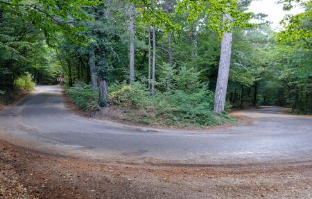 180 degree turn of mountain road in the forest