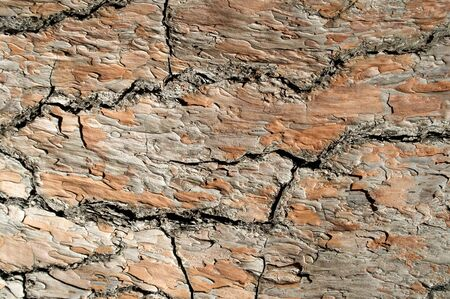 Texture of the pine bark close-up photo