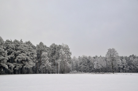 The photo shows a forest in winter, on a cold day, covered in snow and rime, under a cloudy sky  You can see pine trees, alder and birch Stock Photo - 17089856