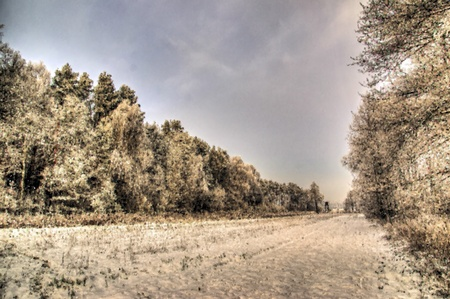 The photo shows a forest in winter, on a cold day, covered in snow and rime, under a cloudy sky  You can see pine trees, alder and birch - painterly Stock Photo - 17089851
