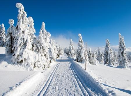 cross country: paisaje paisaje invernal con la modificaci�n manera de esqu� de fondo