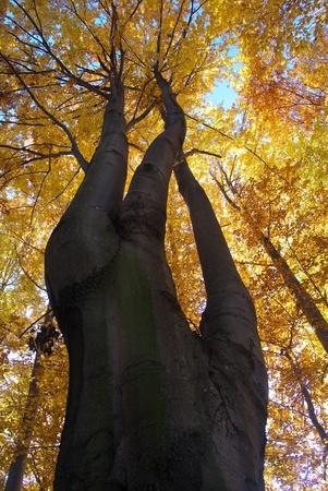 broadleaved tree: view of tree-top of broadleaved tree  Stock Photo