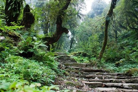 brushwood: nepalian rainforest with pathway  Stock Photo