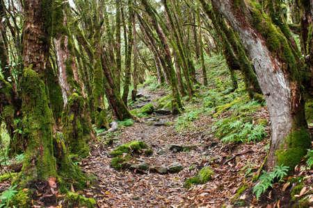 primaeval: nepalian rainforest with pathway