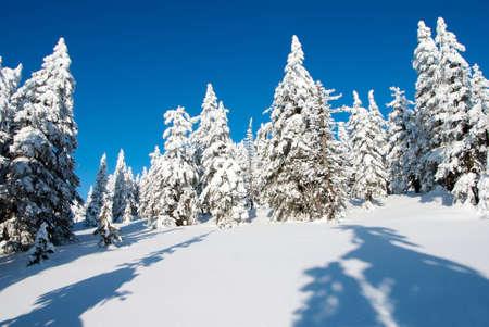wintry: wintry landscape scenery