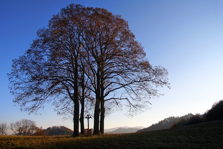 broadleaved tree: view of autumnal group of lime tree  Stock Photo