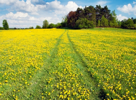 yellow meadow with rural road and beautiful clouds  Stock Photo - 13650151