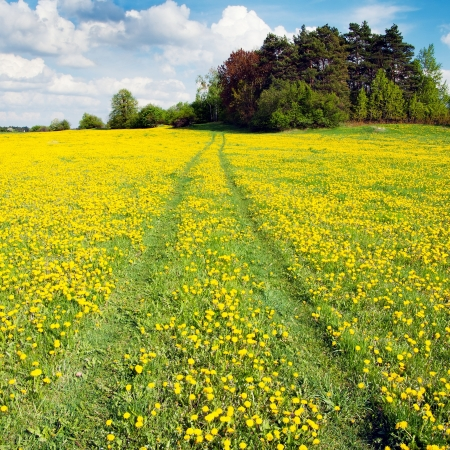 greenfield: yellow meadow with rural road and beautiful clouds