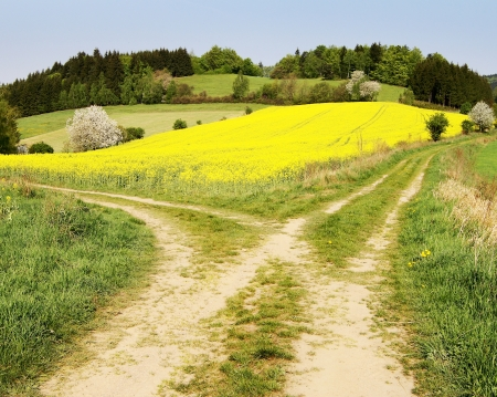 view on field path and yellow rapeseed field - bohemian and moravian highlands Stock Photo