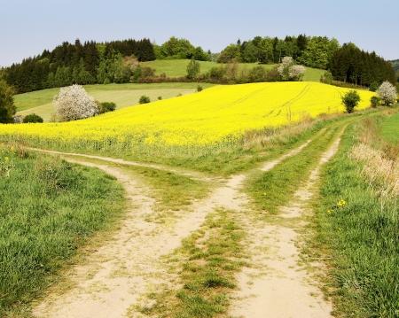 Voir sur le chemin de champ et le champ de colza jaune - Bohême et de Moravie hauts plateaux Banque d'images - 13650155