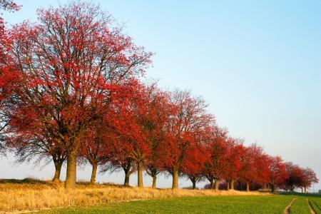 eberesche: Herbstliche Ansicht der Gasse von Aronia