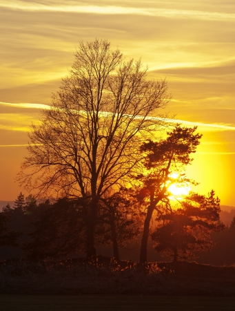 insolación: Puesta del sol con los árboles Foto de archivo