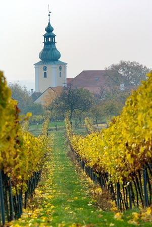 vinery: church in autumnal vineyard  Stock Photo
