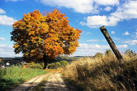 road autumnal: autumnal view of colored tree and rural road