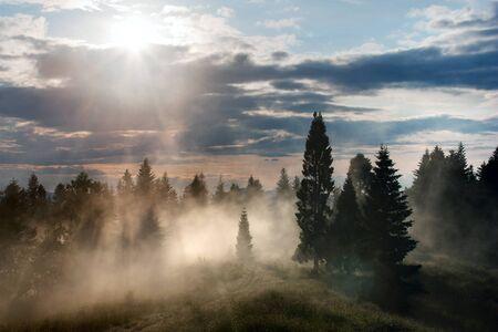 insolaci�n: hermosa vista del bosque de niebla y el cielo con nubes y sol Foto de archivo