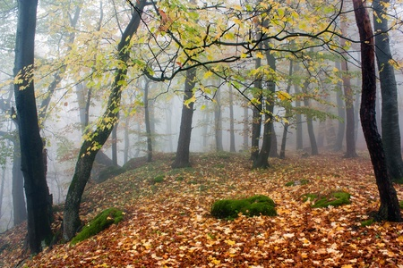 temperate: autumnal view of deciduous wood  Stock Photo