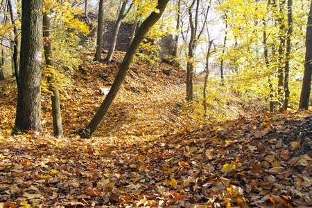 broad leaved tree: autumnal view of deciduous forest and forest way with ruin wall