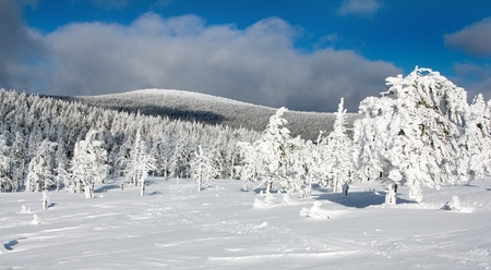 beautiful wintry view of snowy wood on mountains  photo