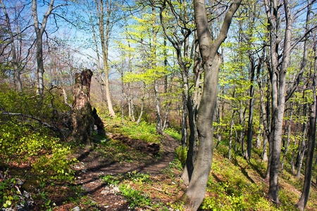 springy: springy view from european beech wood with pathway  Stock Photo