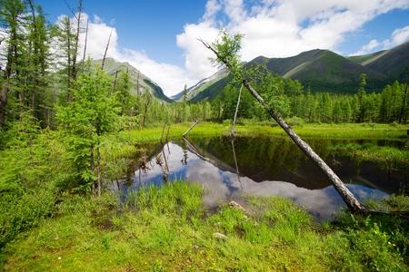 buryatia: tajga in sayan mountains - buryatia - russia