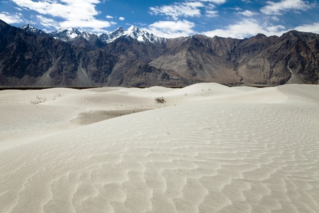 Dunes in Nubra Valley - Ladakh - Jammu and Kashmir - Indian Himalayas photo