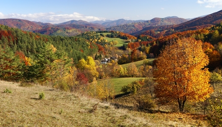broad leaved tree: autumnal view of strazov mount in strazovske vrchy - strazov highlands slovakia europe