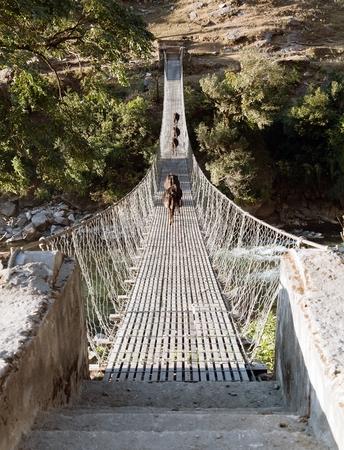 nepali: rope hanging suspension bridge with cows - Nepal Stock Photo
