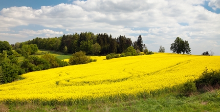 rappi: field of rapeseed - plant for green energy Stock Photo