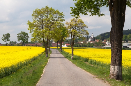 coleseed: road with village , lime trees and rapeseed field