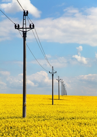 coleseed: field of rapeseed (brasica napus) and medium voltage pole
