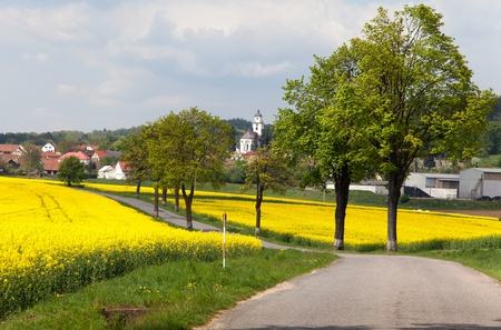 road with village , lime trees and rapeseed field photo