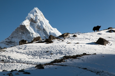 pastureland: Silhouette of yak on the ridge and Ama Dablam - way to Everest base camp - Nepal