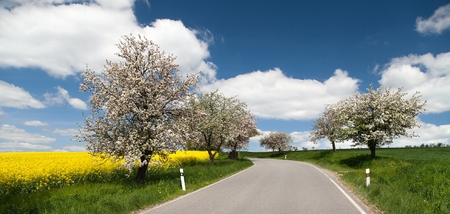 coleseed: spring view of road with alley of apple tree and rapeseed field Stock Photo