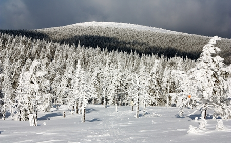 wintry: wintry view of snowy forest on mountain Stock Photo